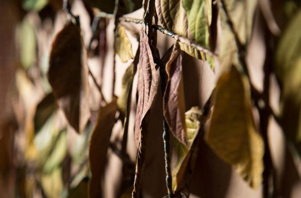 Painel | textura folhas